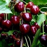Сад мечты или как создать собственную фруктово-ягодную реальность