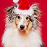 Все собаки встречают Новый Год