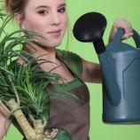 Как помочь комнатным растениям зимой?