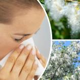 Тополиный пух — жара, апчхи! Как бороться с аллергией?