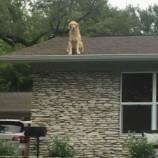 «Наша собака живет на крыше, и мы знаем это. Не волнуйтесь»