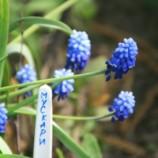 Запоминайте, где — что посадили: садовые маркеры своими руками
