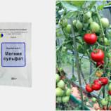 12 удобрений для сада, которые не нужно покупать