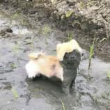 10 с лишним  причин, почему не нужно давать собаке поиграть в грязи