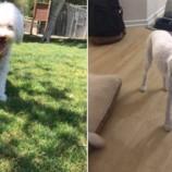 11 изуродованных собак, или почему на самом деле не надо стричь собаку