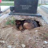 На могиле хозяина собака спрятала самое дорогое