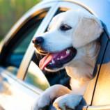 10 советов для удачных поездок с животными на машине