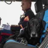 Пса-военнослужащего проводили в последний путь с почестями