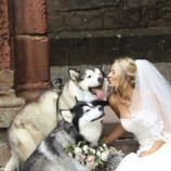 Подружкой невесты и шафером на свадьбу пригласили двух маламутов