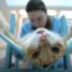Кастрация котов: возраст и доводы «за» и «против»