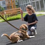 Первый раз в «1 «Аф» класс». Стартовал новый обучающий онлайн-курс для детей, которые мечтают о собаке