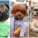 Самые популярные собаки Инстаграма. В них нельзя не влюбиться