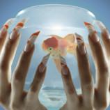 Московский салон предложил украсить ногти аквариумом с живой рыбкой
