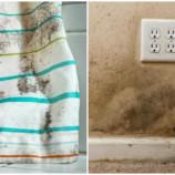 Как предотвратить плесень в доме и что делать, если она уже появилась?