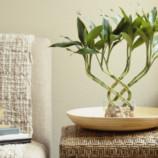 9 простых приемов фэн-шуй, которые помогут зарядить дом позитивной энергией