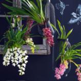 Орхидеи. Дыхание природы в вашем доме