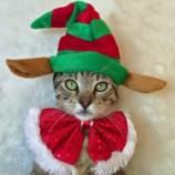 Смешные фотографии котов в забавных рождественских костюмах покорили Сеть