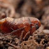 Блохи – паразиты в квартире, от которых нужно избавляться срочно